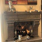 Star York cats