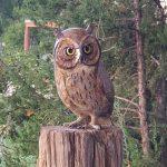 Star York Owlette